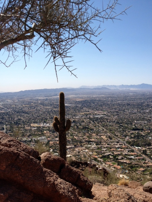 Phoenix view (image)
