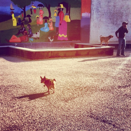 dog park (image)
