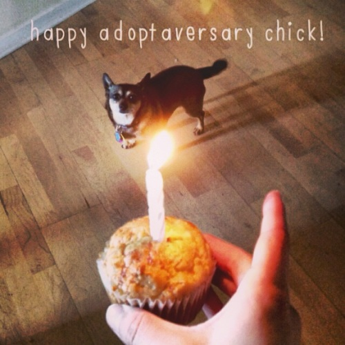 chick one year