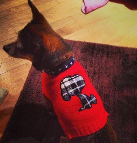 chick-sweater