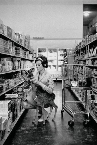 Audrey Hepburn (image)